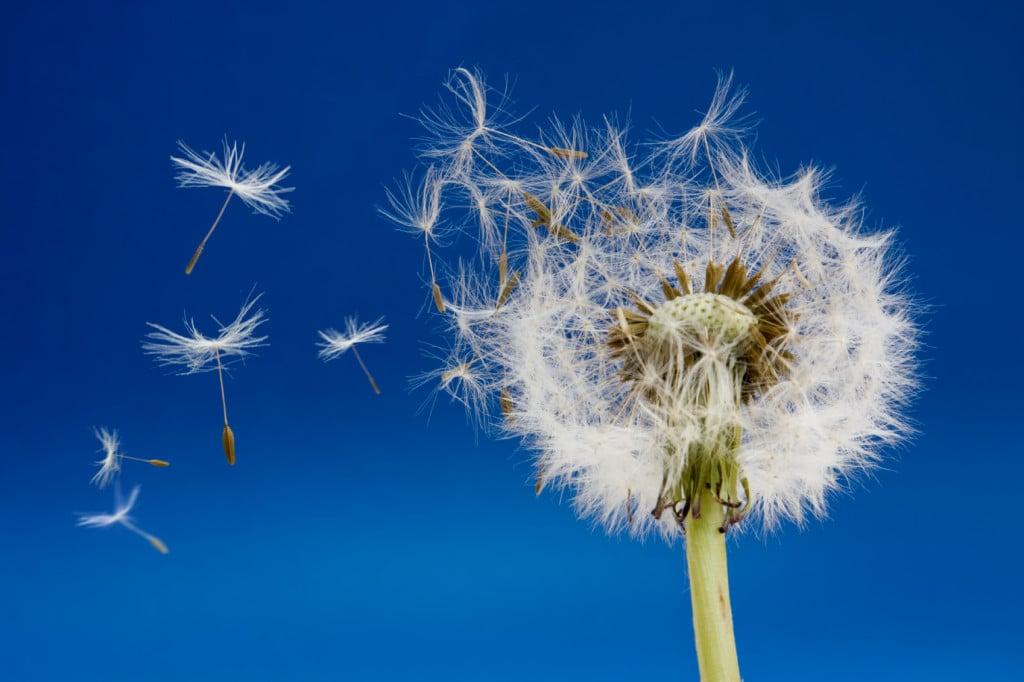 La Journée Mondiale de l'Environnement, buzz ou flop ?