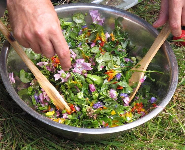 Les plantes sauvages comestibles et leurs usages, guide pratique1