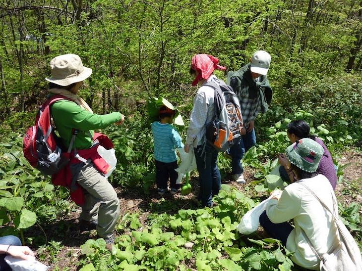 Les plantes sauvages comestibles et leurs usages, guide pratique2