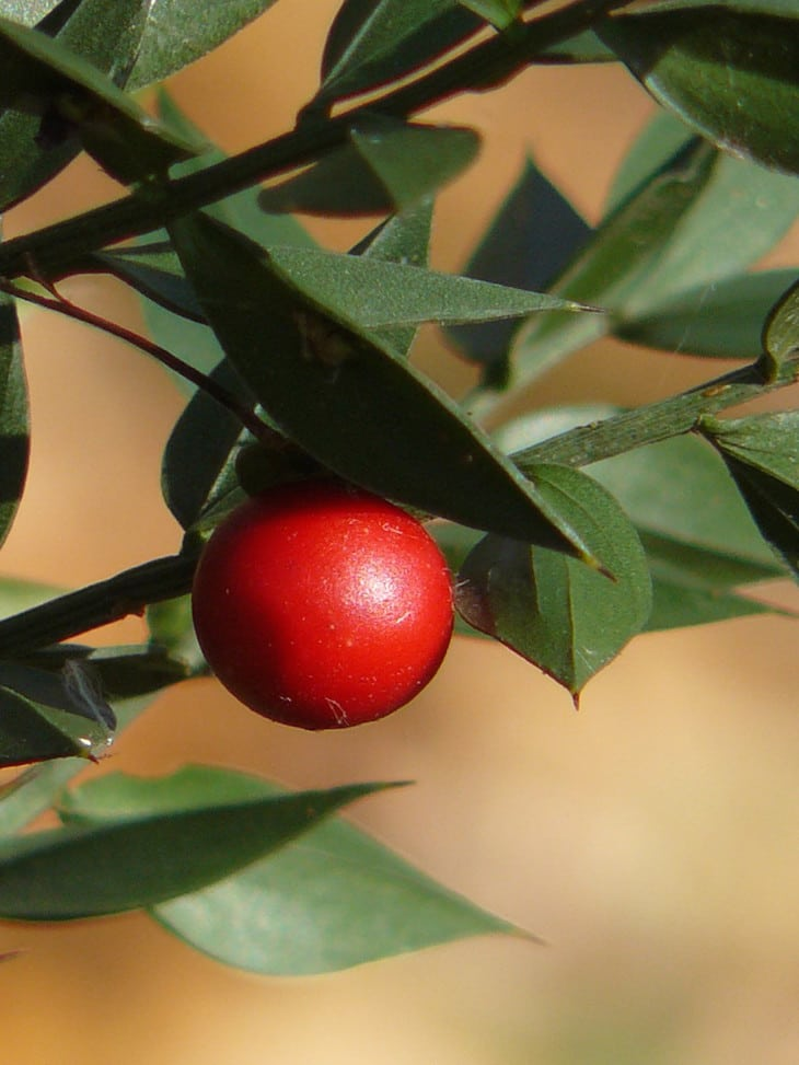 Les plantes sauvages comestibles et leurs usages, guide pratique3
