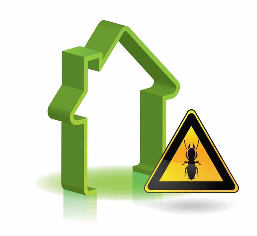 Le diagnostic termites, quand le faire et à quel prix