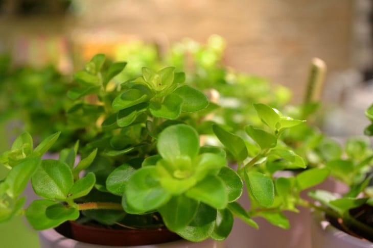 Plante d 39 appartement tout conna tre pour bien choisir sa for Acheter plante interieur