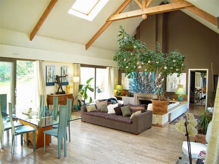 Plante d 39 appartement tout conna tre pour bien choisir sa for Jardin interieur appartement