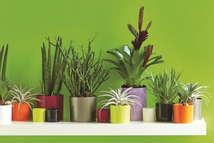 Plante d 39 appartement tout conna tre pour bien choisir sa for Plantes d interieures