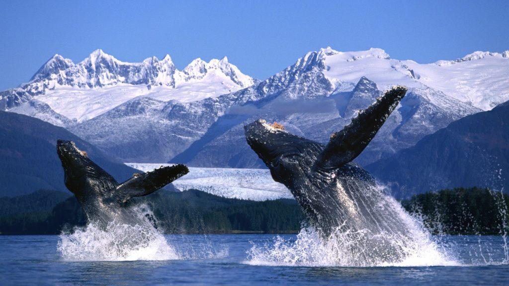 Découvrir le meilleur de l'Alaska aux Etat-Unis