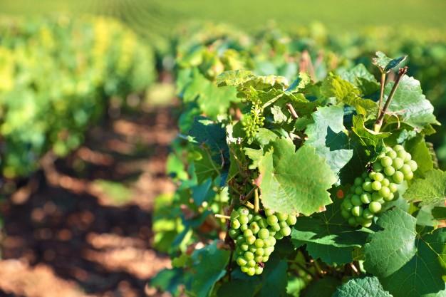 Tourisme viticole en Bourgogne